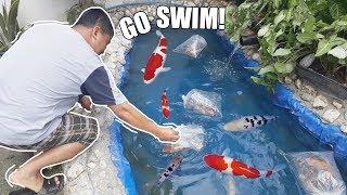Download LOADING KOI FISH & DESIGNING FILTER BOX! Video