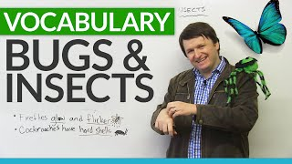 Download English Vocabulary: Talking about BUGS and INSECTS Video