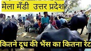 Download Sale & Purchase ,Cow/ Buffalo Mela (Mandi) Uttar Pardesh- 2018 | Video