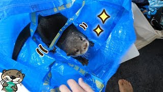 "Download カワウソ ビンゴ「私をコインランドリーに連れてって」Otter Bingo ""Bring me to the coin laundry, pleeeease"" Video"