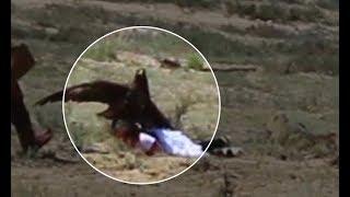 Download Golden eagle attacks 8 yo girl at ethnofestival in Kyrgyzstan Video