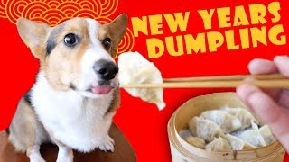 Download Lunar New Year DUMPLINGS for Year of the DOG || Life After College: Ep. 585 Video