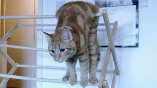 Download ANIMAL VIDEOS so FUNNY you will FALL OUT OF CHAIR LAUGHING - Funny ANIMAL compilation Video