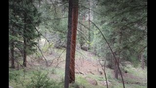 Download A shredded shirt, a new shelter! Colorado Bigfoot findering (and gold panning) Video