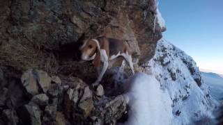 Download Dog rescue attempt, Part 1 Video