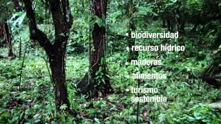 Download Costa Rica: Árboles para un desarrollo ambientalmente sostenible Video