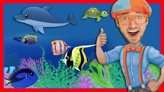 Download Story Time with Blippi | Treasure Chest Video