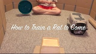 Download How to Train a Rat to Come Video