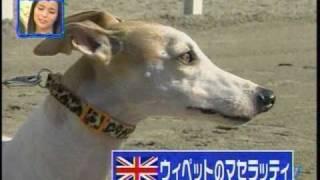 Download 陸上競技【100M】対決 ウサイン・ボルトVS犬。M,Y Video