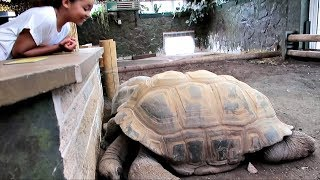 Download Kids Family Trip to the ZOO! - Worlds biggest Tortoise & Crazy Monkeys Attack - Educational Video Video