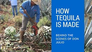 Download How Tequila Is Made: Behind The Scenes of Don Julio Tequila Video