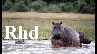 Download Hippos, Birds, Monkeys, Elephants, Buffaloes. The dry season. 2018 HD. Documentary. Video
