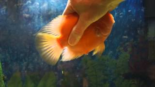 Download My Fish Loves Me! He would rather play than eat! Video