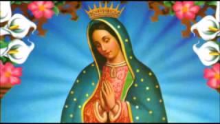 Download CANTOS GUADALUPANOS Y MARIANOS | Vers. Andina - Acústico | 12 DE DICIEMBRE | Divina Misericordia TV Video