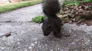 Download Real Squirrel Attack!!! Video