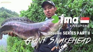 Download ima Singapore: ima Sasuke Series Part 2 - Giant Snakehead Video