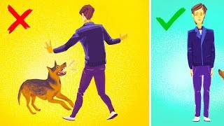 Download How to Survive a Dog Attack Video