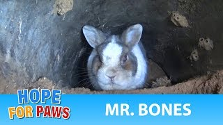 Download A rescue at the cemetery reveals a beautiful bunny under a grave. Video