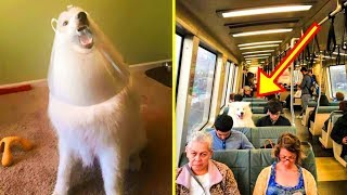 Download If These 50+ Samoyed Photos Don't Make You Smile, Nothing Will Video