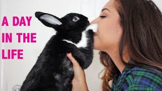 Download A Day in the Life of a Bunny Mom Video