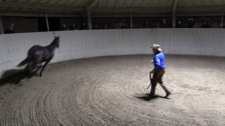 Download Monty Roberts explains Join-Up® with Equus, the horse Video
