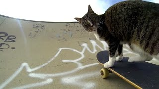 Download GoPro: Didga the Skateboarding Cat Video