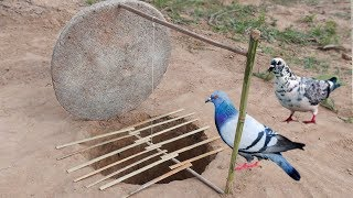 Download Creative Unique Parrot Bird Trap Using Dead fall Trap Made Video