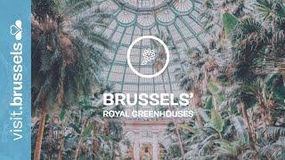 Download Brussels Royal Greenhouses of Laeken Video