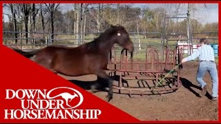 Download Clinton Anderson Presents Running Scared: Training An Aggressive Horse Video