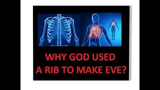 Download Why Did God Use A Rib To Make Eve The regenerating regrowing amazing rib bone marrow stem cells DNA Video
