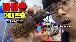 Download 세계에서 가장 큰 곤충을 사왔다.ㅋㅋ아마존 만들어도 됨!!말이필요없다.[정브르] Video