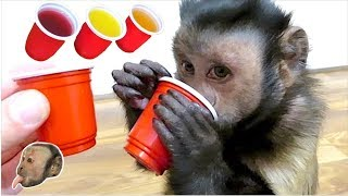 Download Monkey Red Solo Cups! Video