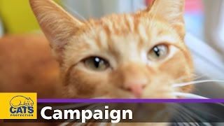 Download Cats Protection's Manifesto for Cats Video
