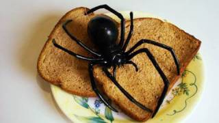 Download Giant Black Widow Spider Video