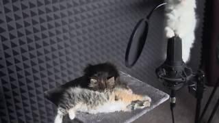 Download Cute KITTENS Sing In AUTOTUNE Video