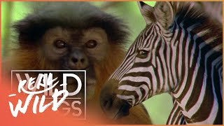 Download Wild Family Secrets | Full Series Live Stream | Wild Things Video