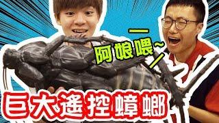 Download 大蟑螂出擊!YouTuber驚聲尖叫,整人大成功 Ft.一大堆創作者【黃氏兄弟】PRANK Video