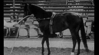 Download Vorschau: Pferdeverhalten und Pferdedressur (Zeeb 1975) Video