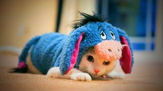 Download Cute Pets 🐱🐶 Lovely Cats And Dogs Wearing Costumes (Part 1) [Funny Pets] Video