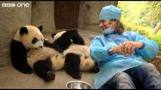 Download Martin Meets the Panda Cubs - Nature's Miracle Babies - Episode One - BBC One Video