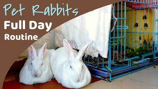Download Daily Rabbit Routine | Having Pet Rabbit in India vlog 4 Video
