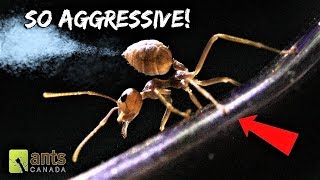 Download My New WEAVER ANTS Will Blow Your Mind Video
