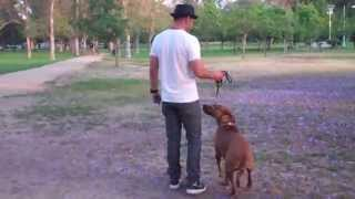 Download The Good Dog Minute 6/4/13: Severe leash aggression with biting turned around in minutes! Video