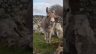 Download Harriet the Singing Donkey 'Serenades' Passerby Video