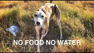 Download She was abandoned with no food or water ... AMAZING HAPPY END! Video