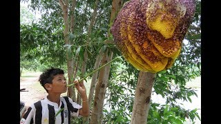 Download Wow! Smart Boy Show How To Get Honey Bee In Cambodia - Traditional Bee Hunting In My Village Video