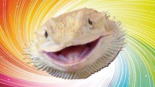 Download *Cute* Bearded Dragons Memes from Instagram! Video