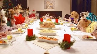 Download Freshpet Holiday Feast - 13 Dogs and 1 Cat Eating with Human Hands Video