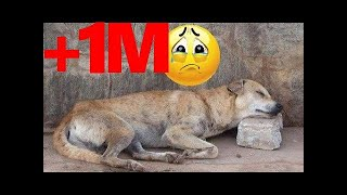 Download homeless dog waiting to die... then guess what happened Video