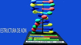 Download Como hacer la MAQUETA del ADN facil paso a paso Video